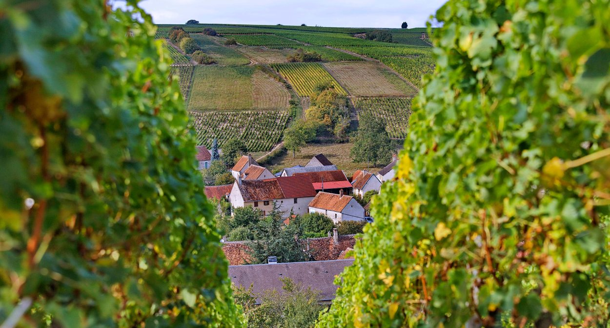 Le vignoble de Sancerre ©BIVC_CR Christophe Mouton
