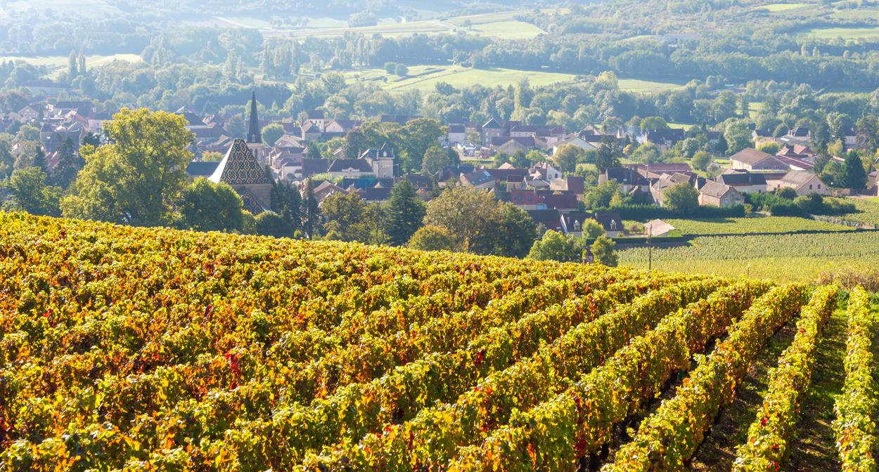 Santenay sur la route des vins de Bourgogne