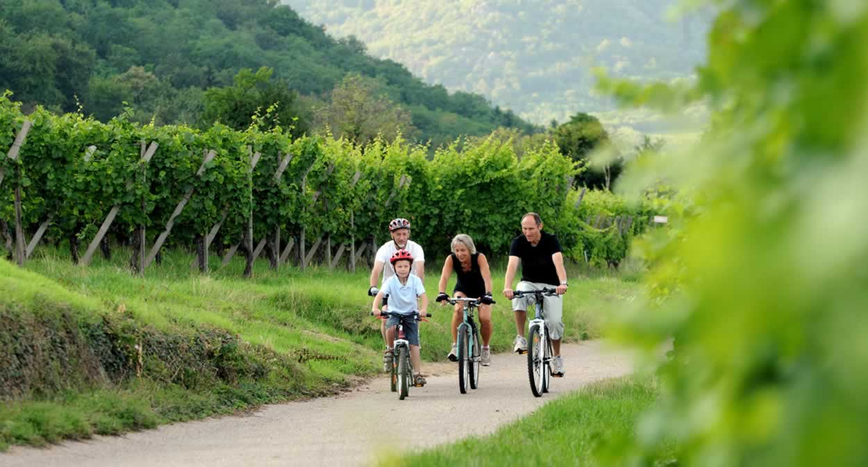 Cycling along the wine paths on the Route des Vins d'Alsace © DUMOULIN-ConseilVinsAlsace