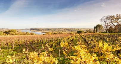 Domaine des Génaudières - Le Cellier and a view over the Loire © A. Lamoureux