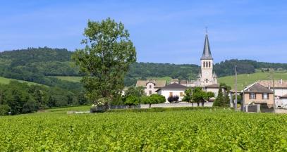 Chenas vineyard of Beaujolais ©JB Laissard Inter Beaujolais