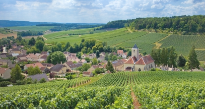 Vineyard of Champagne côte des bar Vivier sur artaut wine tourism ©Didier Guy