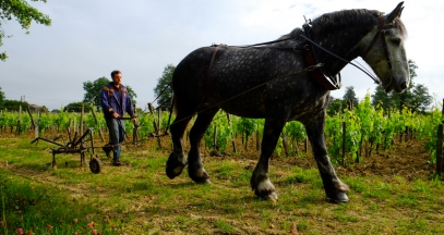 Chateau Coutet wine tourism and biodiversity at Saint-Emilion Bordeaux ©Pierre de Ferluc