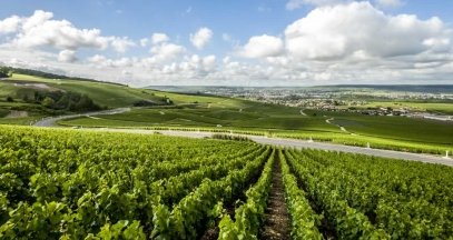 Hillside vineyards of the Marne, Champagne vineyard © Coll. ADT Marne
