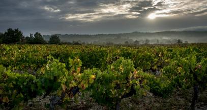 Les vignobles de l'AOP Pierrevert © François Xavier Emery, OTC DLVA
