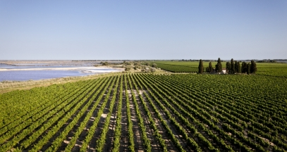 Vignobles du Domaine Royal de Jarras © Grands domaines du littoral