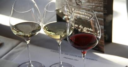 Au coeur de la Bourgogne viticole © Alicia Prenot
