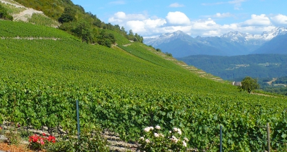 Léard Viboux vineyard wines of Savoie ©Jeme Hugot