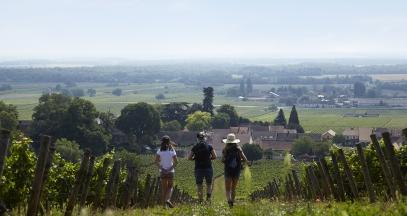 Promenade dans les vignes de Bourgogne ©BIVB Les créations de l'étoile - Louise Barillec