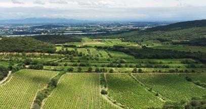 Les vignobles de la Vallée du Rhône selon Jeanine D'onofrio