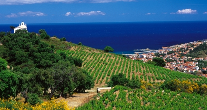 Vineyard of Roussillon ©Paul Palau Banyuls