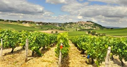 Vignoble de Sancerre foire aux vins val de loire ©CRT Centre Val de Loire