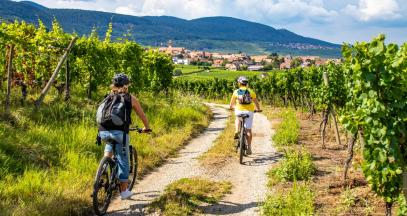 Vélo'Vignes at Domaine Rieflé-Landmann ©Alsace Destination Tourisme
