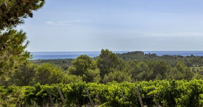 Pays d'Oc vineyard wine tourism ©Inter Oc