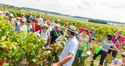Vines, Wines and Walks in the Loire Valley @Interloire - Stevens Fremont