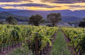 High Environmental value and organic farming in the vineyard © L'Escarelle