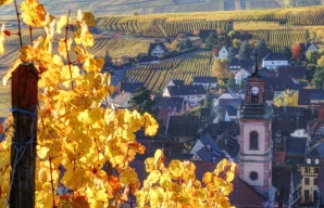 Riquewihr and its vineyards © Ophorus