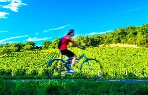 Cycling in Burgundy ©OT Mâcon - Greg Michel