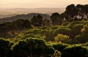 Vines in the mist © Christophe Grilhé