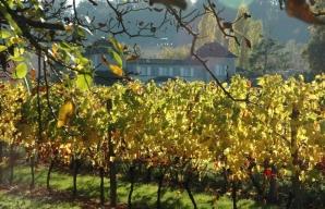 Rent your own vines © Domaine de la Queyssie