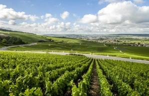 Hillside vineyards of the Marne Champagne vineyard © Coll. ADT Marne