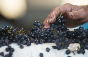 Sorting table at domaine Henri Bourgeois Loire Valley vineyard ©Henri Bourgeois
