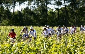 Vignes Vélo Bordeaux © Philippe Roy
