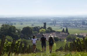 Walks in the vines of Bourgogne ©BIVB Les créations de l'étoile - Louise Barillec