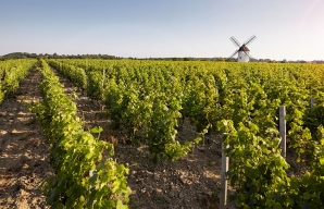 Champ de vignes ©A. Lamoureux - Vendée Expansion