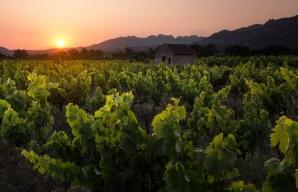 Vineyard at sunset © David Bouscarle