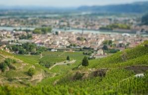 Tain l'Hermitage vigne en terrasse balade pédagogique côtes du rhône ©Inter Rhône