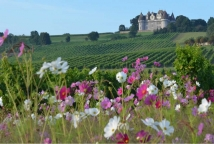 La Vinata, vignoble de Bergerac ©F. Millo