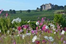 La Vinata, Bergerac Vineyard ©F. Millo