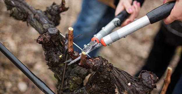 Pruning festival at the chateau l'hospitalet tasting of Languedoc wines ©Sofiane Zaidi