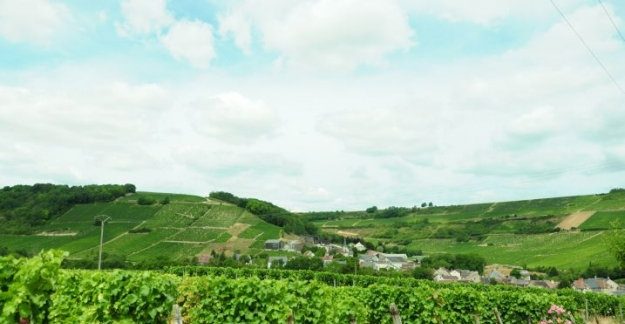 Format Raisins Val de Loire vignes