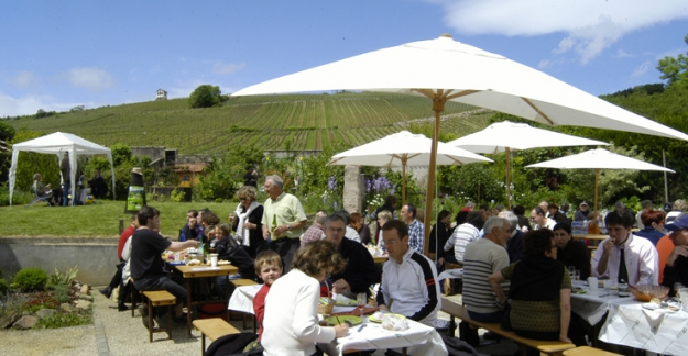 Picnic in the vineyards of Alsace © Synvira