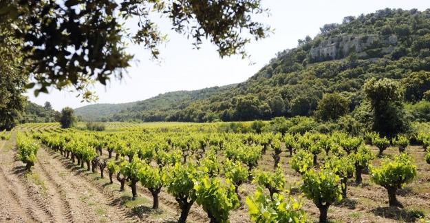 Lirac's vineyards©CédricPrat