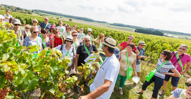 Vines Wines and Walks in the Loire Valley @Interloire - Stevens Fremont