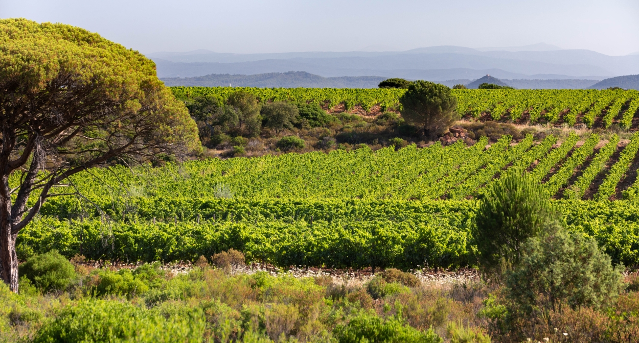 Provence's vines and terroir ©Hervé FABRE-CIVP