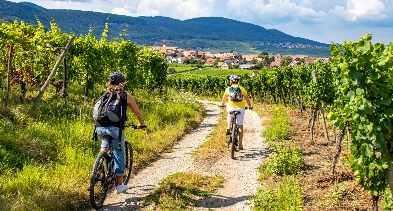 Vélo'Vignes au Domaine Rieflé-Landmann ©Alsace Destination Tourisme