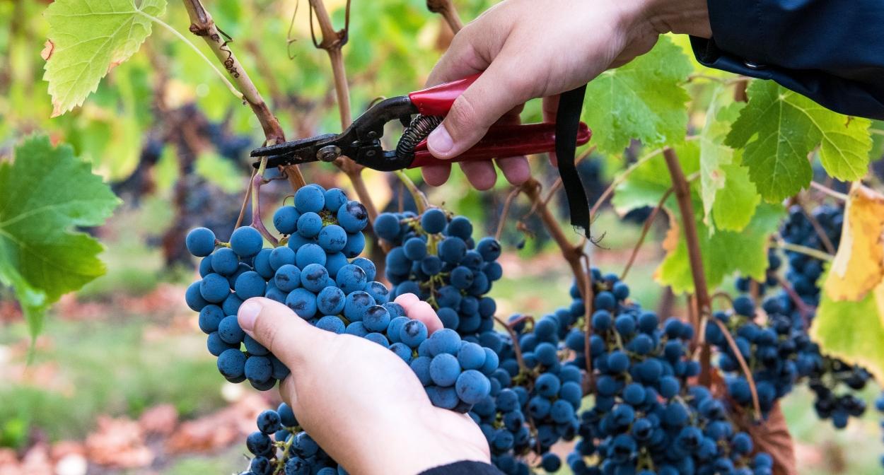 À la rencontre des vignerons du Bordelais avec Millésime Privé ©Frédéric Nau