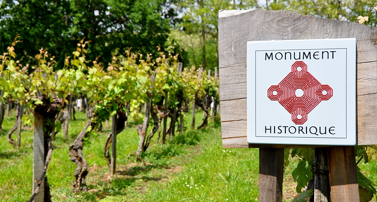 The Plaimont vineyard plot listed as a historic monument ©Plaimont