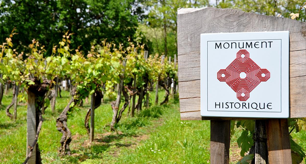 La parcelle de vigne de Plaimont inscrite aux Monuments historiques ©Plaimont
