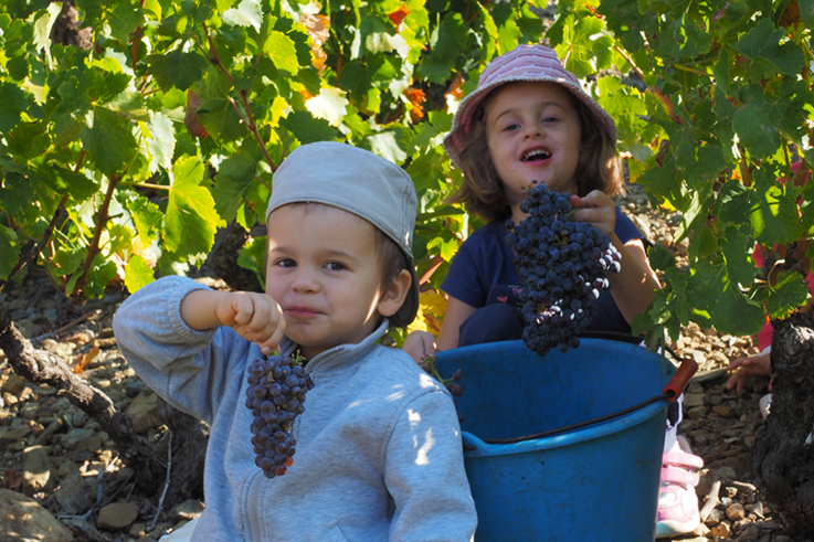Children in the vineyards at Banyuls harvest festival of the wine of roussillon ©Paul Palau