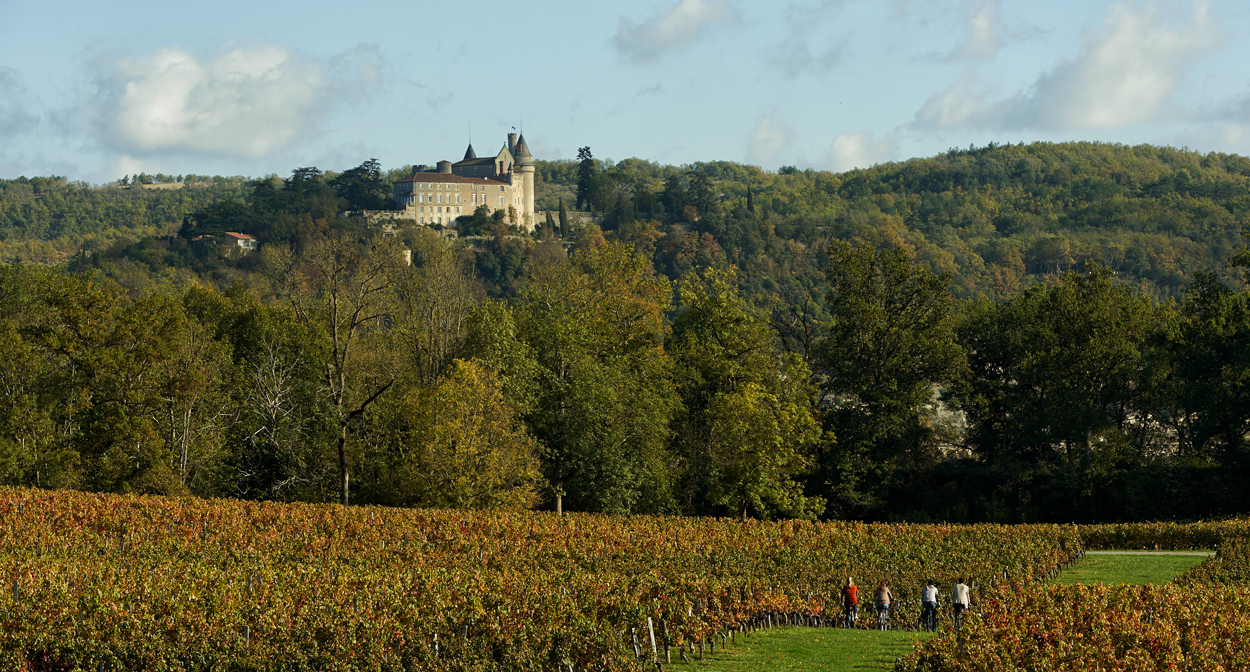 Cahors vineyard