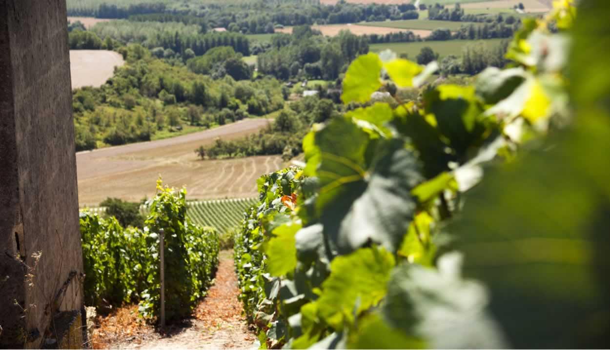 Vignoble – Mont de la Fourche © P. Verin