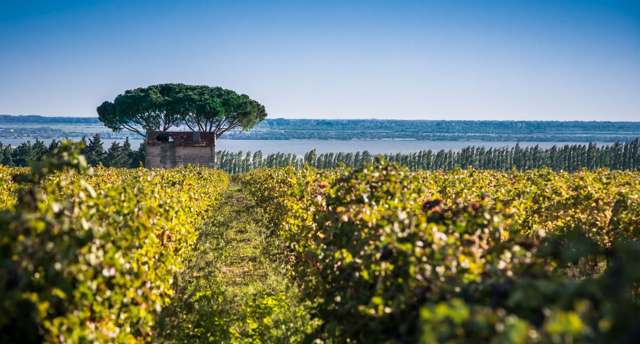 Lagoons and the vineyard © David Z