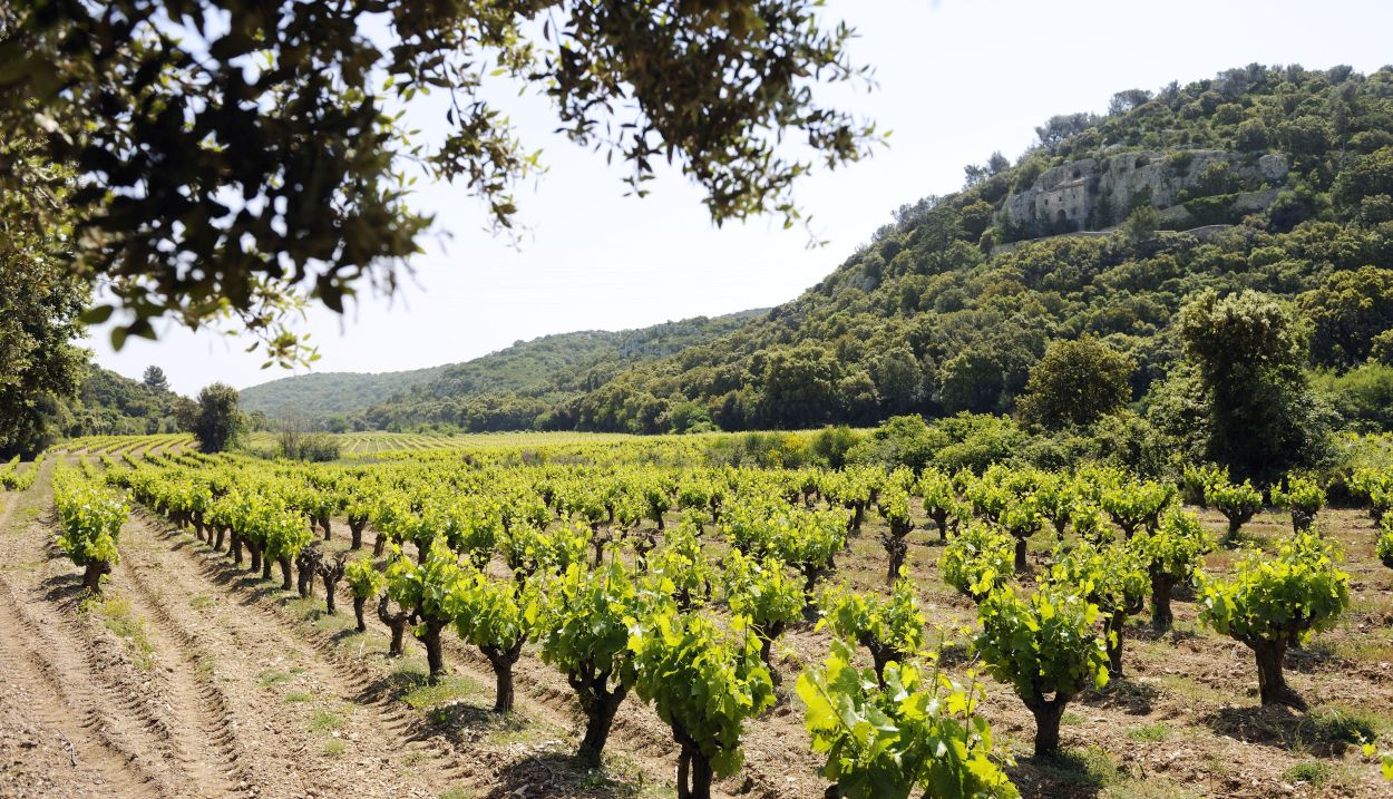 Lirac's vineyards©CédricPrat