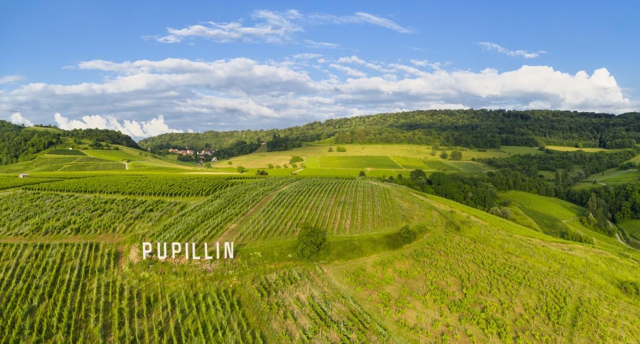 Pupillin's vineyard © Jura Tourisme