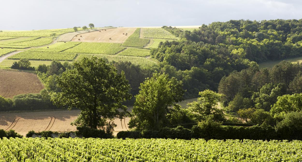 Vignes, Château de Béru ©ChâteaudeBéru